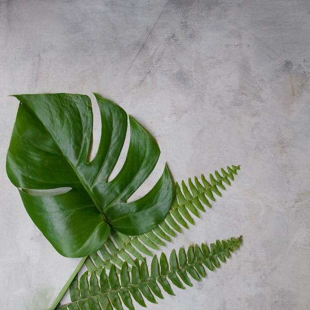 白い背景の上の緑の熱帯の葉。フラット横たわっていた、上面図。コピースペースのアートワークモックアップ。 Premium写真