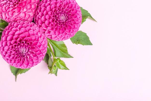 緑の葉と芽を持つダリアボール蛮花 Premium写真