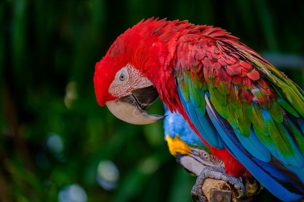 Красочный попугай. Premium Фотографии