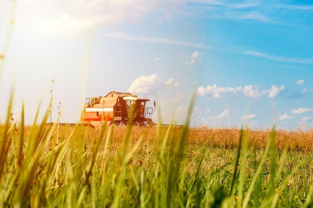 晴れた日に赤のコンバイン収穫ライ麦フィールド Premium写真