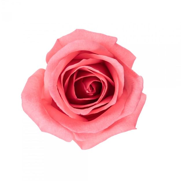 上面図と美しいピンクのバラの花のイメージを分離します。 Premium写真