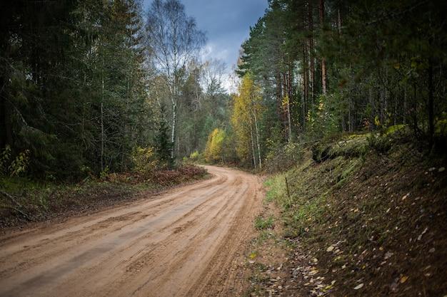 秋の森を通る林道 Premium写真