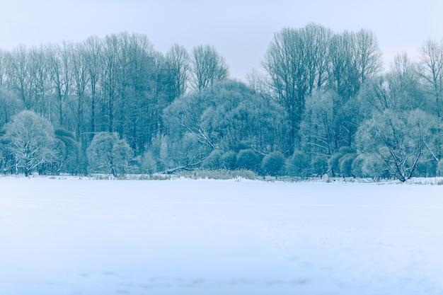 冬の風景、日中の木の写真 Premium写真