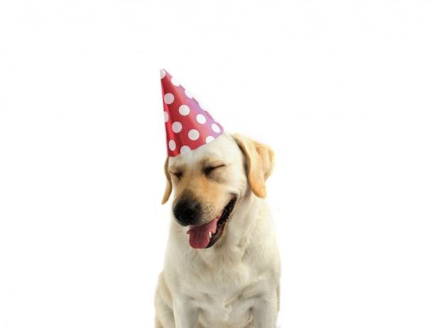 犬の誕生日または新年のパーティーには、コーラルポルカドットパーティーの帽子を差し上げます。 Premium写真