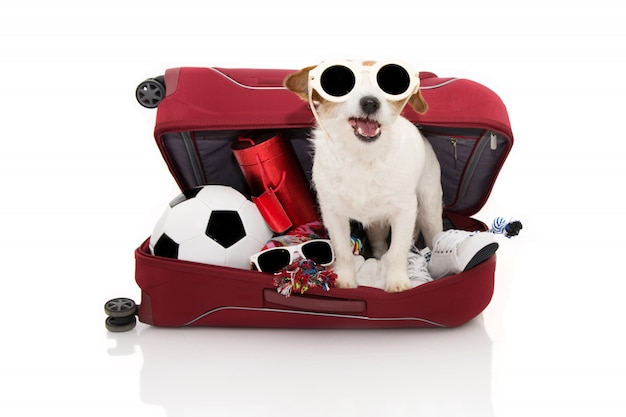サングラスを身に着けて夏の休暇に行くスーツケースの中の犬。 Premium写真