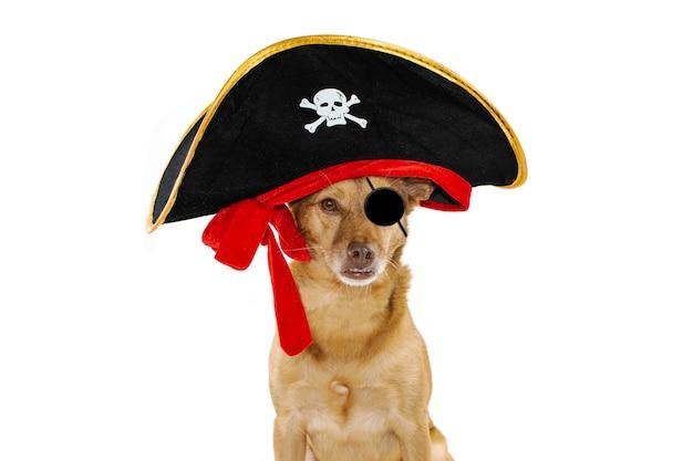 犬は海賊のハロウィーンまたはカーニバルコスチュームの帽子に包まれて Premium写真