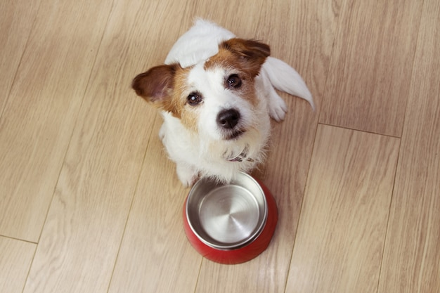 Голодная собачья еда с красным пустым шаром. высокий угол обзора. Premium Фотографии