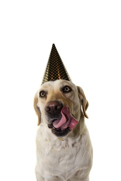 犬の新年や誕生日パーティーの帽子 Premium写真