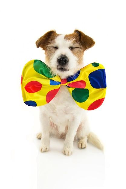 カーニバルの道化師として服を着たおかしい犬 Premium写真