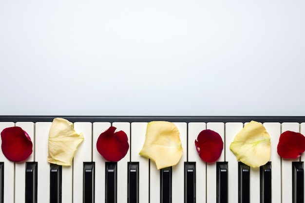 赤と白のバラの花びら、分離、上面図、コピースペースとピアノの鍵 Premium写真