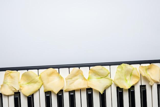 白いバラの花びら、分離、上面図、コピースペースとピアノの鍵。 Premium写真