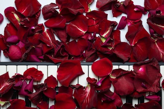 バラの花びら、分離、上面図、コピースペースと散らばってピアノの鍵。 Premium写真