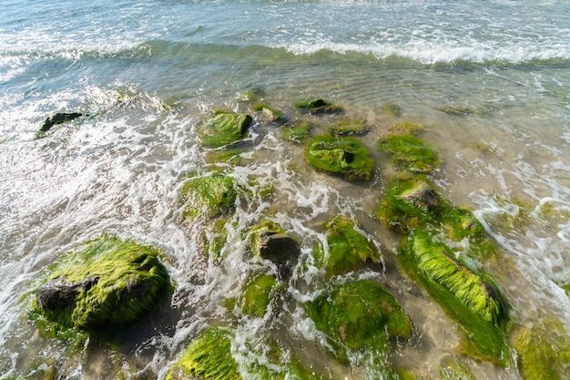 海潮ボア。コケや藻が生い茂った石の上で波が壊れます。美しい海の景色。 Premium写真