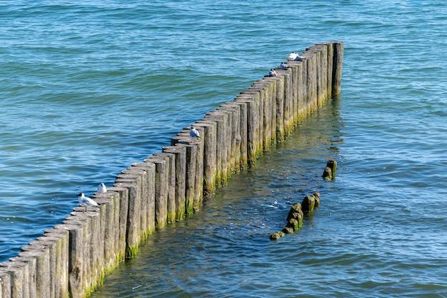 ビーチの防波堤。木製の海セパレーター。美しい海の景色。行楽客を天候と沿岸漂流の両方の影響から保護します。 Premium写真
