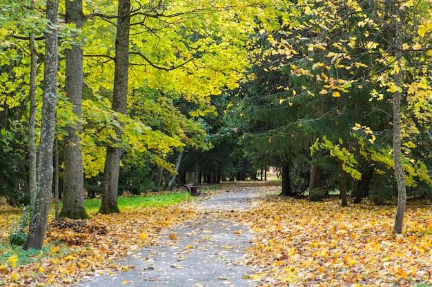 都市公園の美しい秋。カラフルなカエデの木とモミ、空のベンチ。秋の美しい自然の風景。ベラルーシの秋の公園 Premium写真