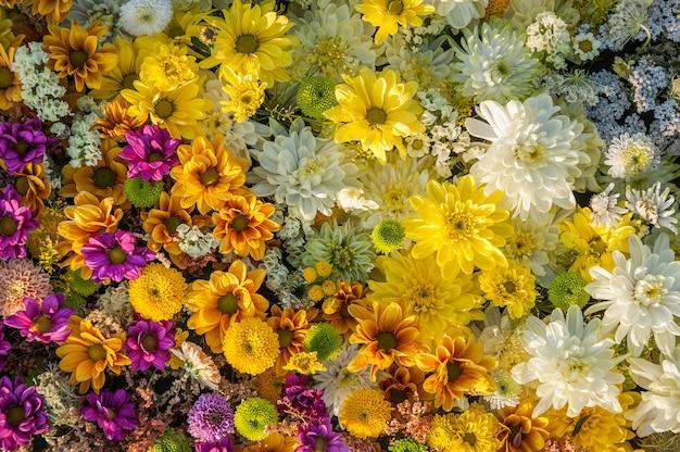 黄色と白の菊の花 Premium写真