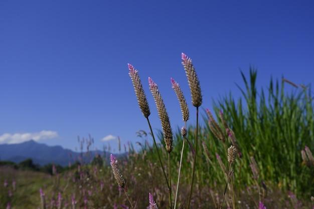 青い空を背景に自然の中のガラスの花 Premium写真