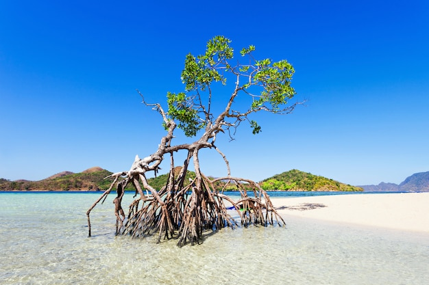 マングローブの木 Premium写真