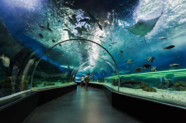 Подводный тоннель Premium Фотографии