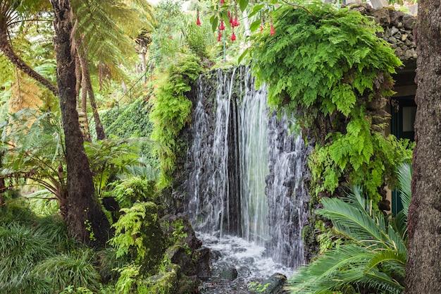 マデイラ島の滝 Premium写真