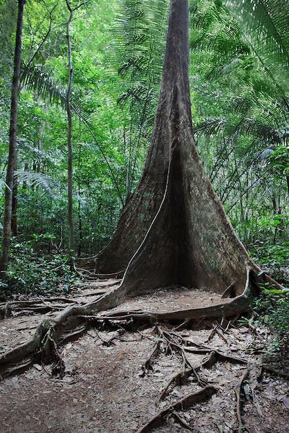 Корень дерева контрфорс Premium Фотографии