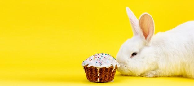 パステルイエローの背景にイースターカップケーキとイースターの白いふわふわライブウサギ。イースター休暇のコンセプト Premium写真