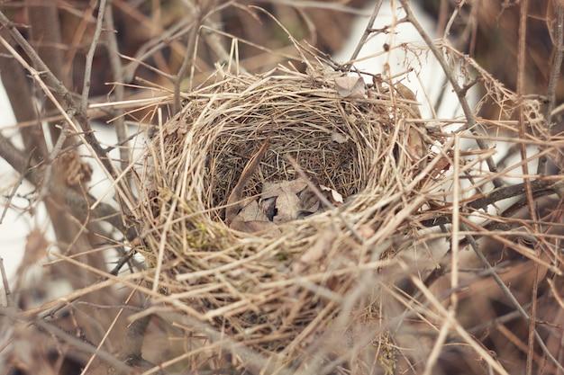 野鳥の古い放棄された巣。早春の小さなスズメの鳥の古いカップの巣 Premium写真