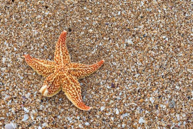 砂浜のビーチでオレンジ色のヒトデ Premium写真