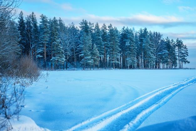 夕方には美しい冬の森。 Premium写真