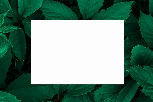 Зеленые листья в качестве фона и белый лист бумаги для этикетки. Premium Фотографии
