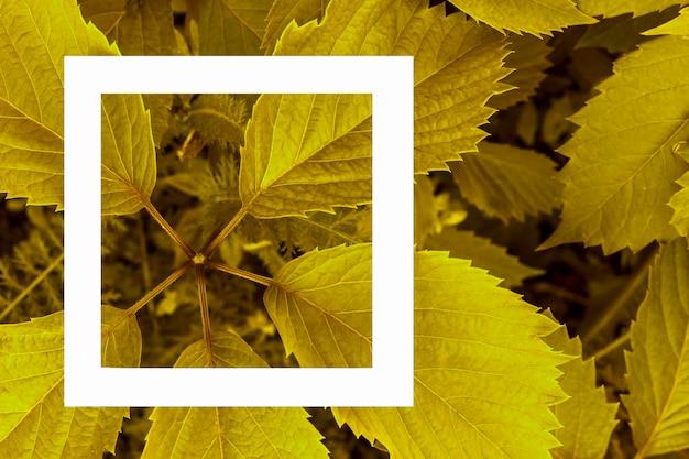 背景としての緑の葉とラベルの白い紙。 Premium写真