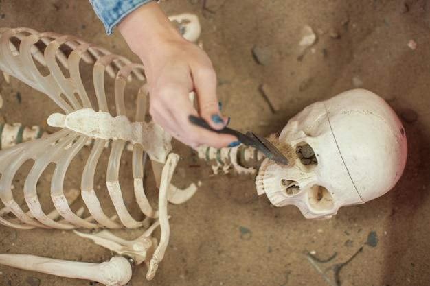 人間の化石発見の概念。 Premium写真