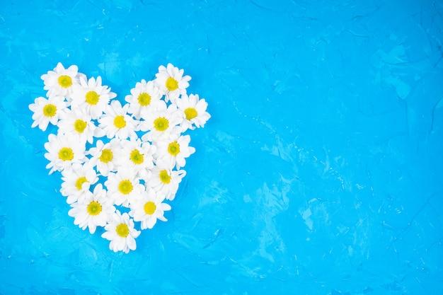 青色の背景に菊 Premium写真