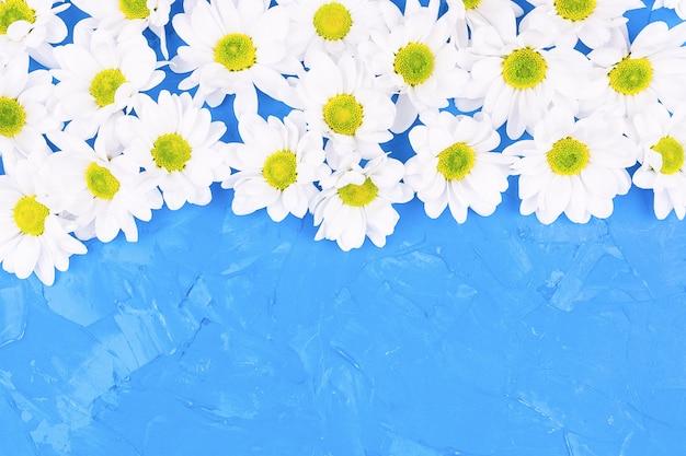 Хризантемы на синем фоне Premium Фотографии