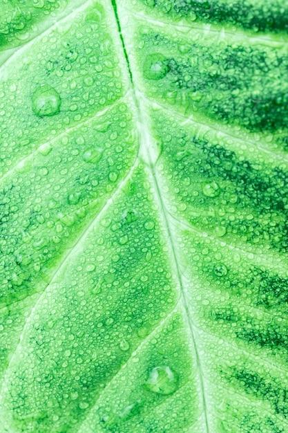 緑の葉の質感 Premium写真