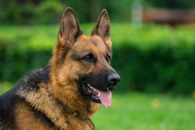 草の上の犬 Premium写真
