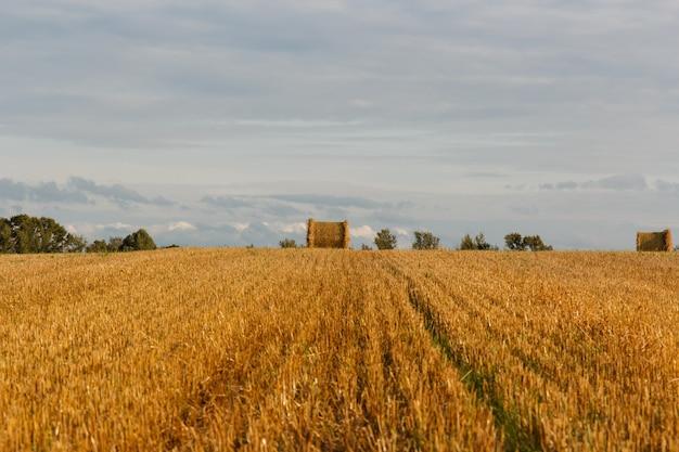 収穫後の干し草の山と黄色のフィールド Premium写真