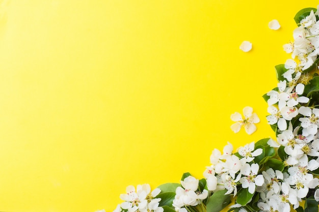 Весеннее цветение ветки на желтом фоне Premium Фотографии