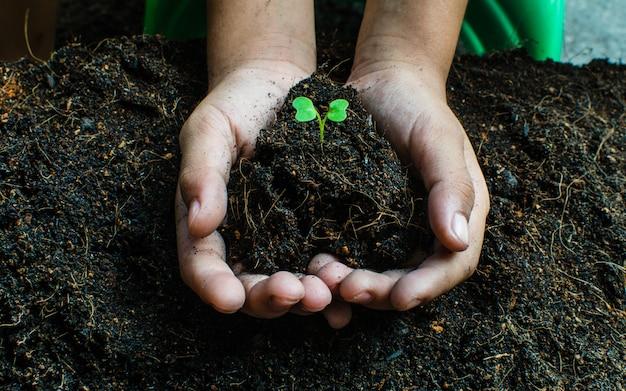 苗の成長を植える方法、 Premium写真