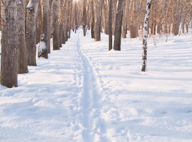 ウィンターパークの雪上スキー用トラック Premium写真