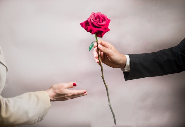 男の手が女性に美しいバラを伸ばす Premium写真