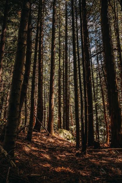 秋の森の中の道 Premium写真