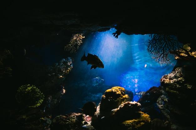 水槽の中の魚 Premium写真