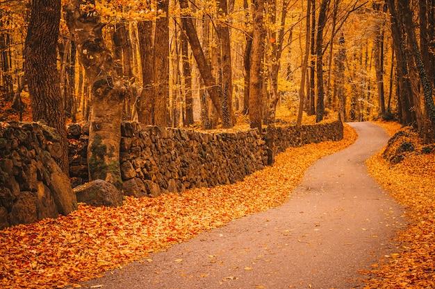 秋の森の中の小道 Premium写真