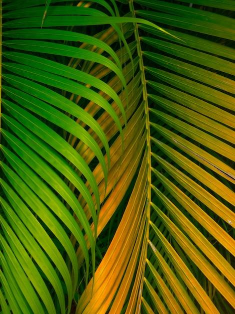 緑の葉のテクスチャー/葉のテクスチャーの背景/コピースペース Premium写真