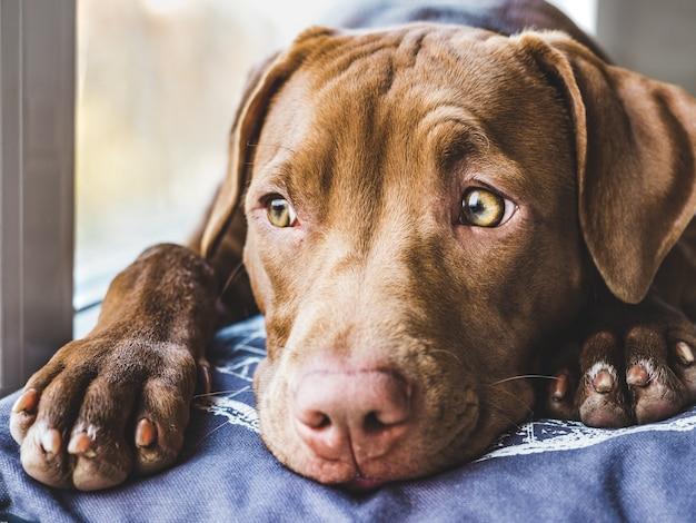 柔らかい格子縞で寝ている甘い子犬 Premium写真