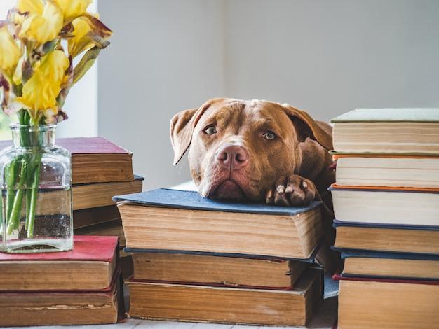 Милый щенок и старинные книги. студийное фото Premium Фотографии