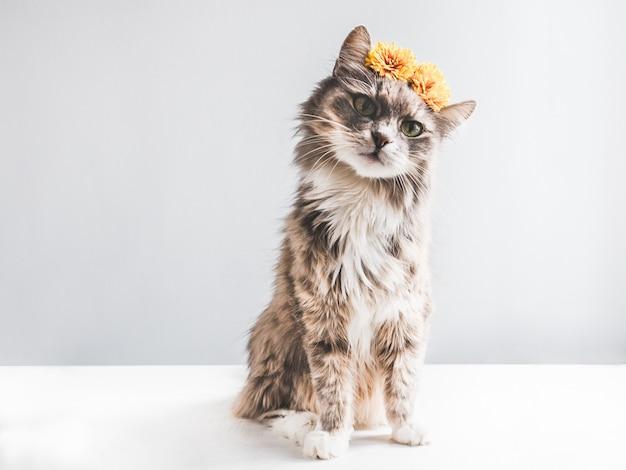 黄色の花を持つ魅力的でふわふわの子猫 Premium写真