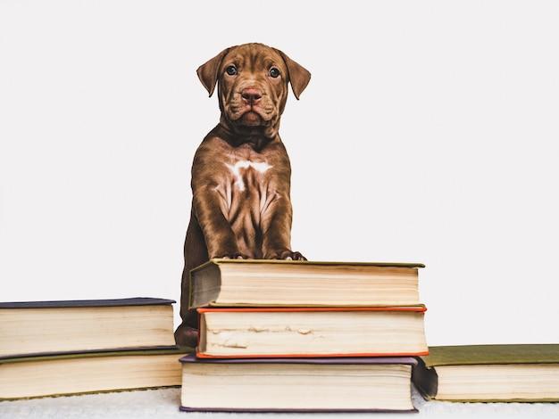 かわいい子犬とビンテージの本。学校に戻る Premium写真