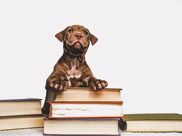 Милый щенок и старинные книги. обратно в школу Premium Фотографии